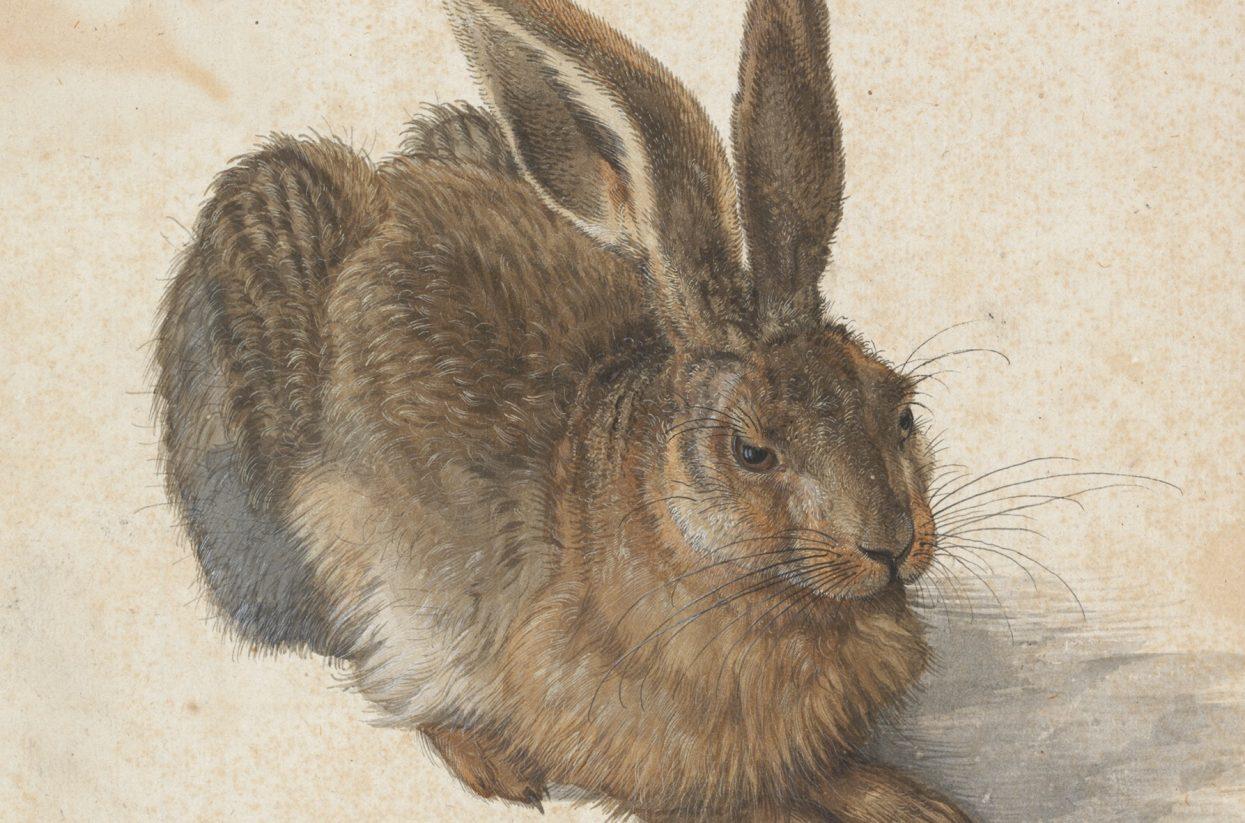 Albertina_Bild 1_Albrecht Dürer Feldhase (C) Albertina, Wien-web